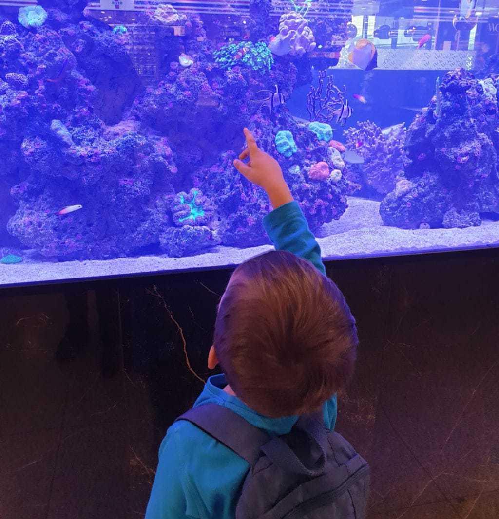 dreng med akvarie nemofisk københavns lufthavn